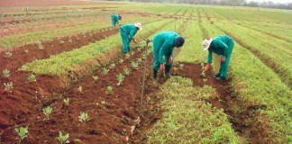 Japanese group trains farmers on modern technology