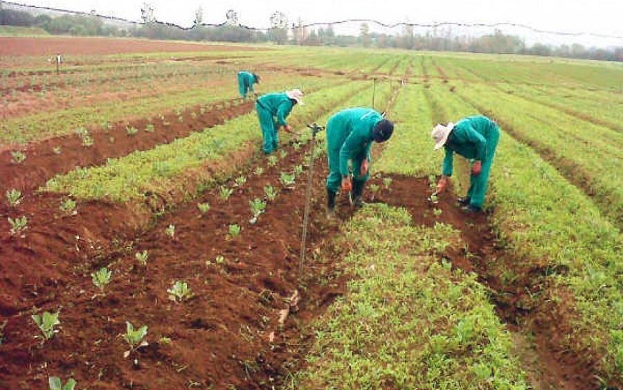 Japanese group trains farmers on modern technology