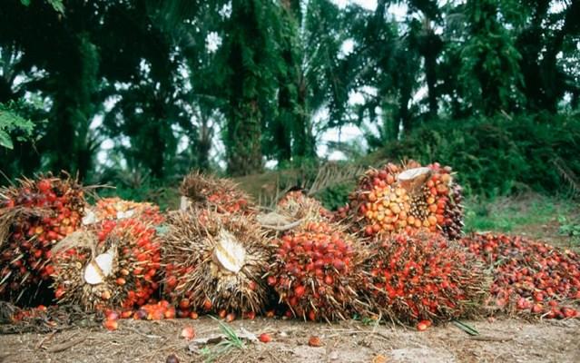 Okomu Oil Palm 's profit declines by 43.22% in Q3 2019