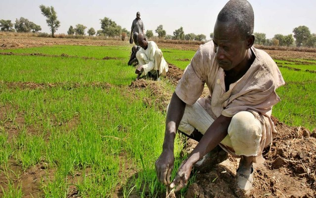 Rice, RIFAN, Farmers to benefit from FG's 50% discount charge on agriculture equipment purchase