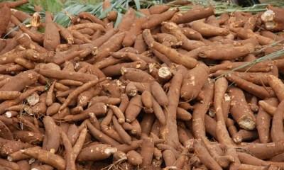 CBN moves to reduce cassava derivatives import worth $600 million