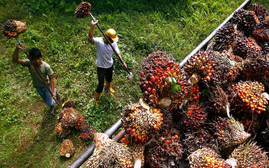 Image result for PALM OIL IMPORTATION INDIA TO IMPOSE FINES ON PRODUCTS