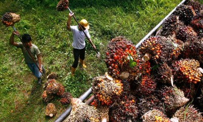 India to discourage palm oil imports through heavy fines