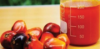 Palm Oil: Industry potentials remains untapped
