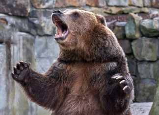 Bears dominate Nigeria bourse trading session, ASI down 2.02%