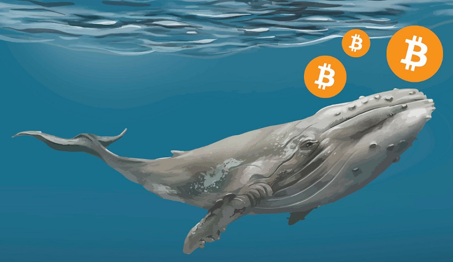 bitcoin-whale-transfers-105-million-worth-of-crypto-btc-trading-at-15800-nairametrics