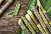 Reasons Why You Should Eat Sugarcane Daily