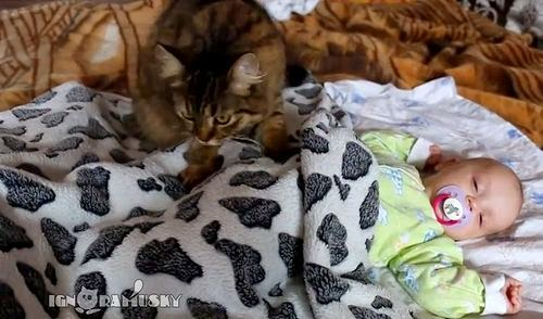 赤ちゃんをやさし〜く寝かしつけるネコさん