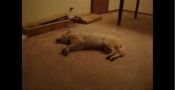 どんな夢を見ているの?眠りながら猛ダッシュする犬!
