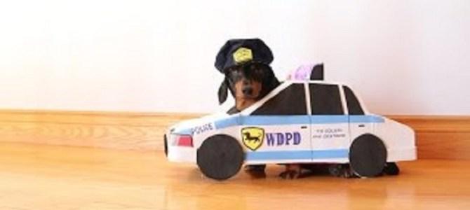 これが本当の「犬のおまわりさん」!犯人犬を勇敢に追いかける!