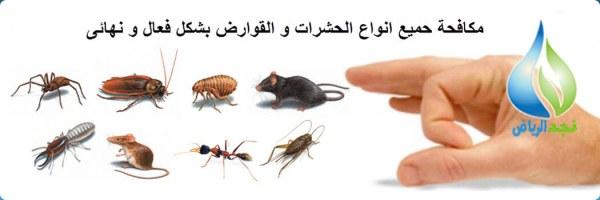 شركة مكافحة حشرات بالرياض 200 ريال 0502977689 رش مبيد بضمان