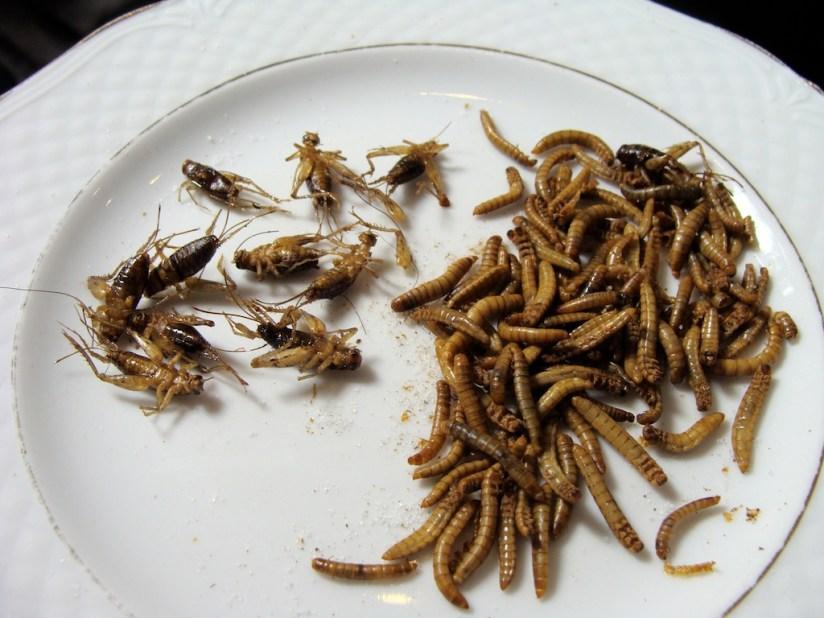Bloger Chef 2014 - larwy mączniaka i świerszcze