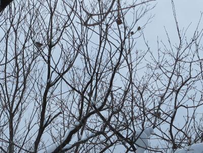 こもれびの道の小鳥