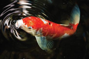 Download 81 Gambar Ikan Yg Hidup Di Air Tawar Terbaru