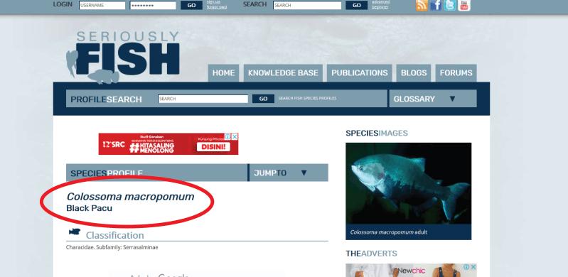 Situs resmi Seriously Fish tentang Black Pacu