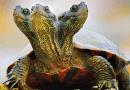 Kenapa Kura-kura Bisa Hidup Sampai Ratusan Tahun?