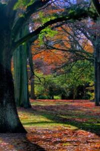falltrees