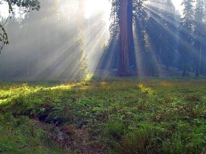 meadows-foggy-smokey-sunbeams