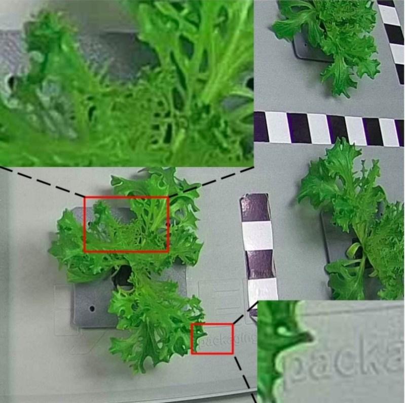 В Сколтехе разработали технологию, которая поможет выращивать растения на Марсе