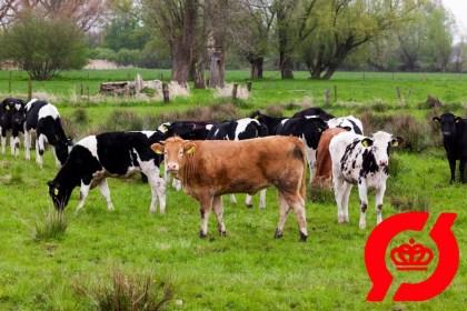 덴마크, 유기농 시장 육성에 1900억원 투자