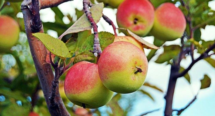 코펜하겐 시, 공공장소에 과일 나무 심는다