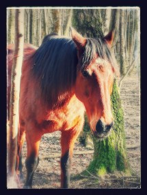 Nakedhorse Journey With Barefoot Horse
