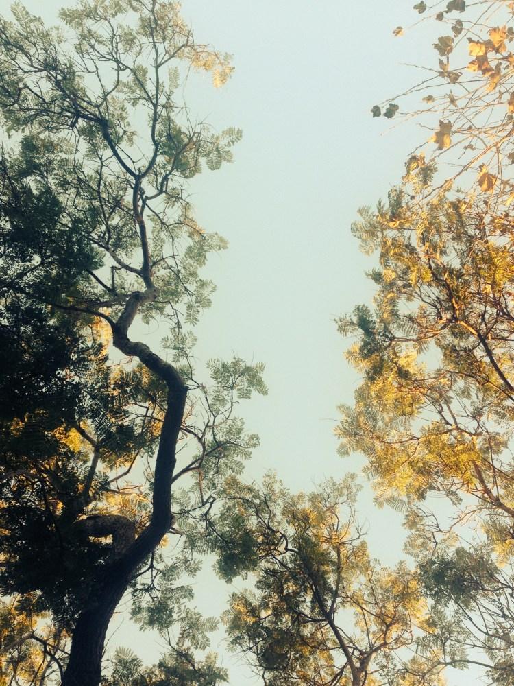 15. SKIES IN ARIZONA