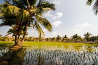 Pola ryżowe w Hampi