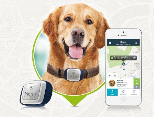 GPS chien chat kippy