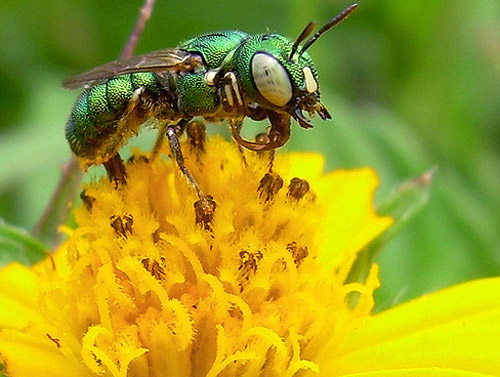 Insect Photography