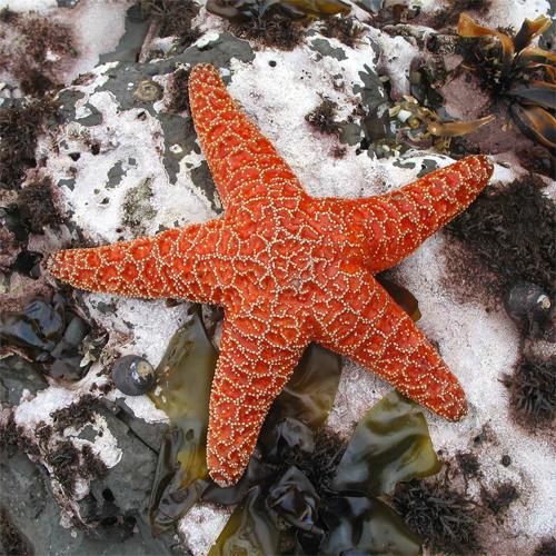 Cute Patrick Star Wallpaper 35 Beautifully Captured Starfish Pictures Naldz Graphics