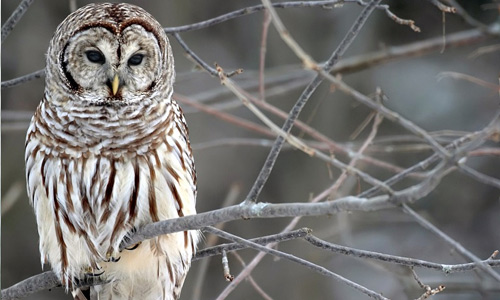 Small Cute Baby Wallpaper Download 35 Lovable Collection Of Owl Wallpapers Naldz Graphics