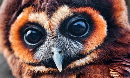 Very Cute Baby Wallpapers Photos 35 Lovable Collection Of Owl Wallpapers Naldz Graphics