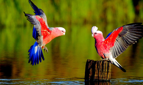 Lovely Cute Baby Couple Wallpaper 40 Free Spectacular Bird Wallpapers Naldz Graphics