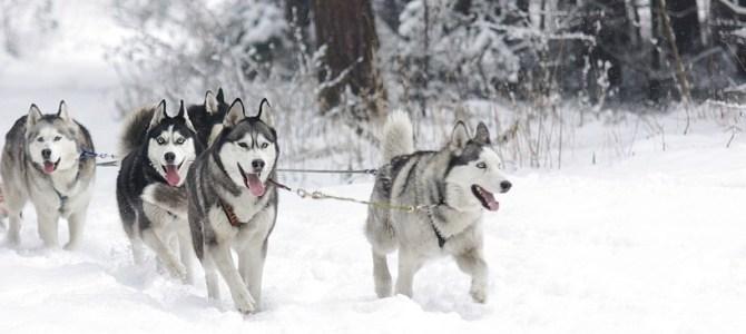 10 zimowych atrakcji turystycznych na Litwie