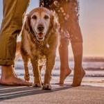 Plaże dla psów na litewskim wybrzeżu