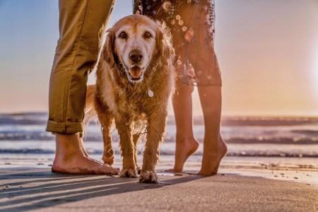 plaże dla psów na Litwie