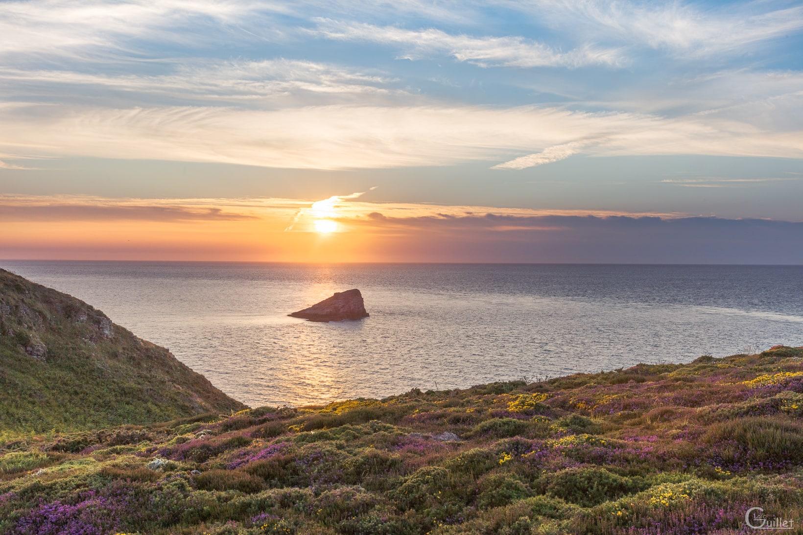 Lande du Cap Fréhel juin 2021