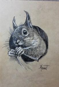 Étude d'écureuil