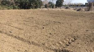 片付け後の農地