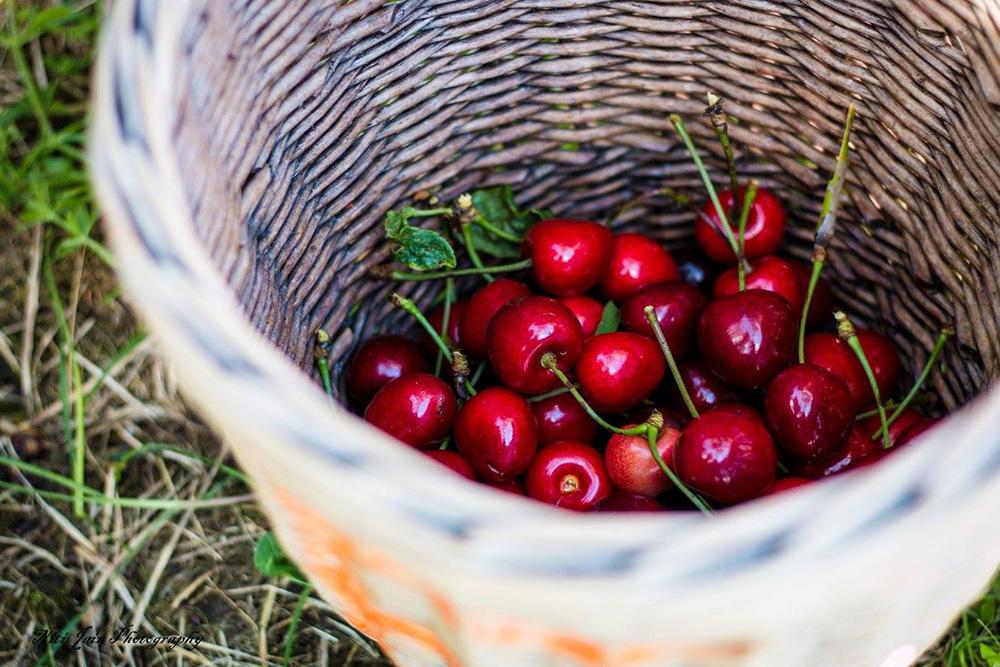 Cherry haul