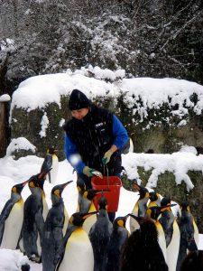Lakshmi feeding Penguins