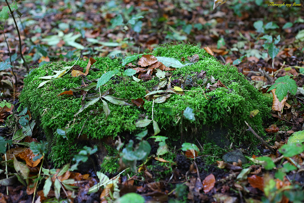 Colourful Moss on old wooden trunk