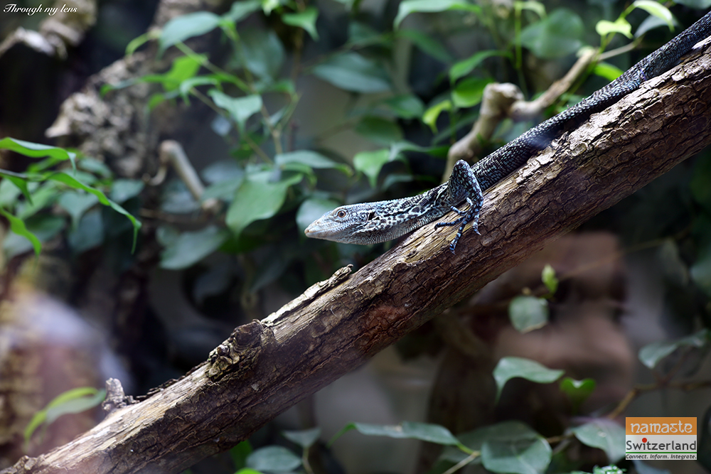 Photo of Creeping Reptiles - Mesmerises with its patterns