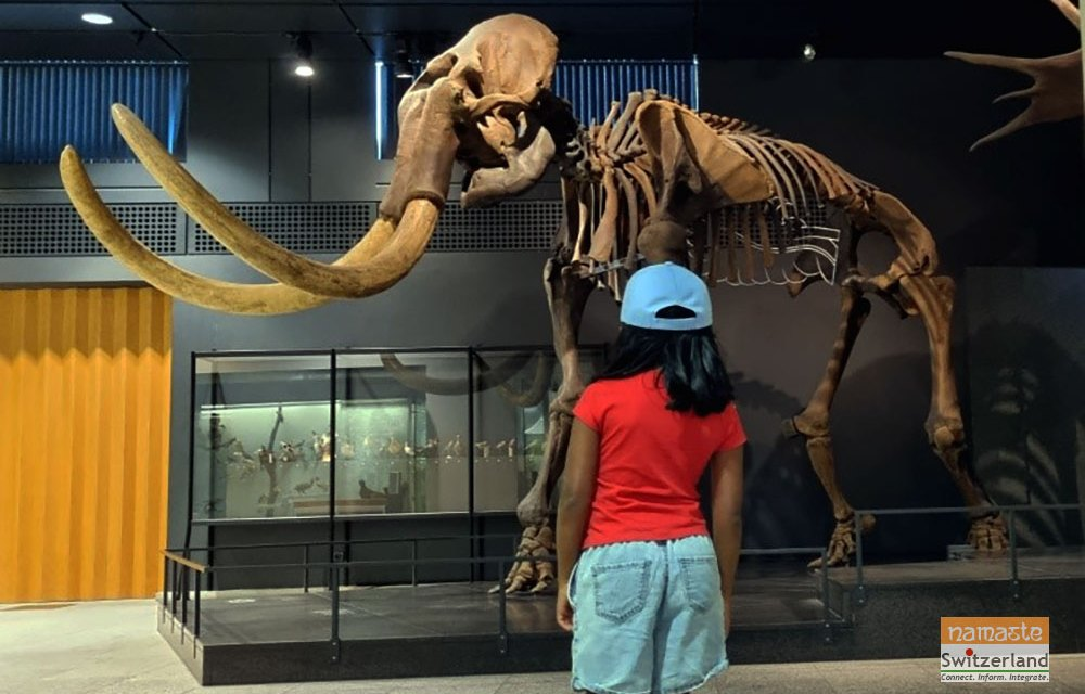 A visit to the Paleontology and Zoological Museum in Zurich