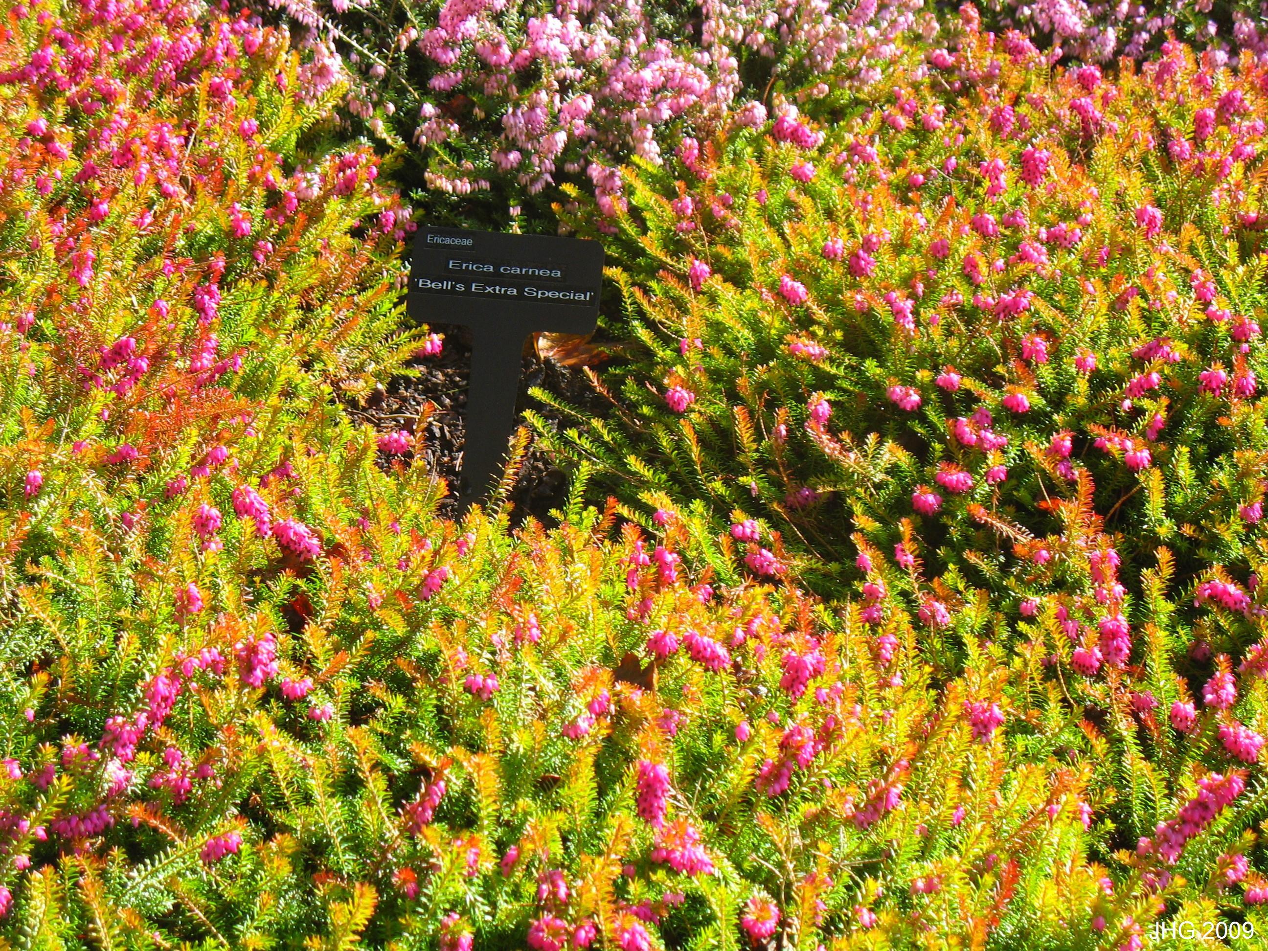E.c Bell's Extra Special foliage color.