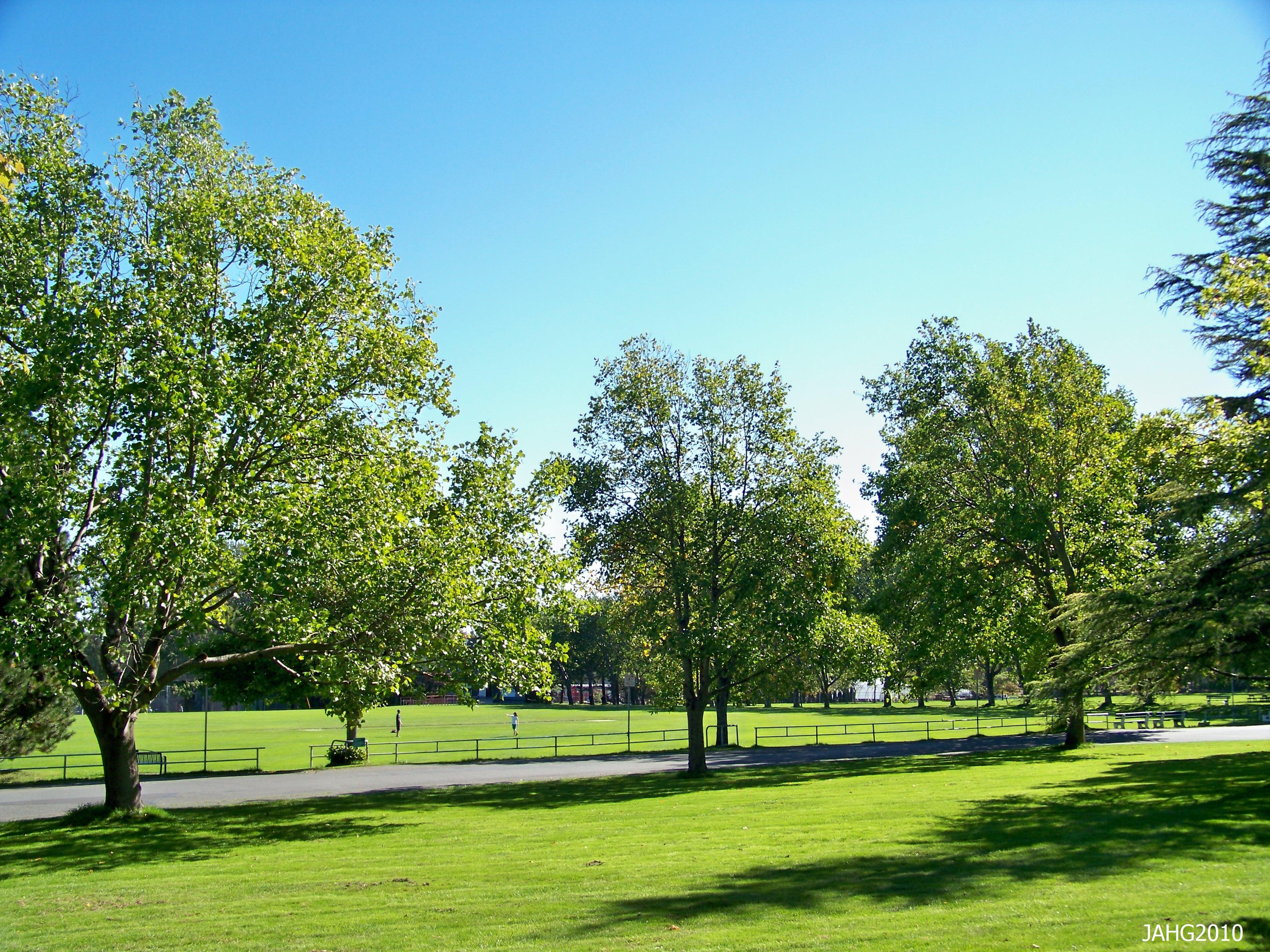Lawn Trees  Name That Plant