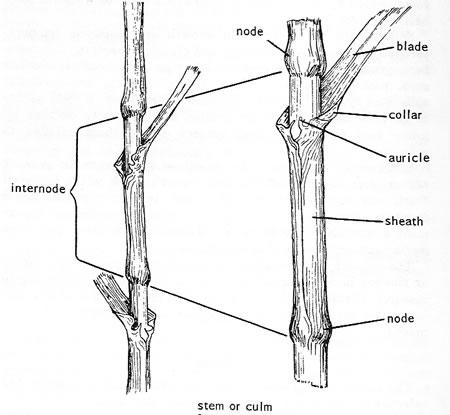 Pin Ice Cube Relay Wiring Diagram On 8. Pin. Wiring Diagram