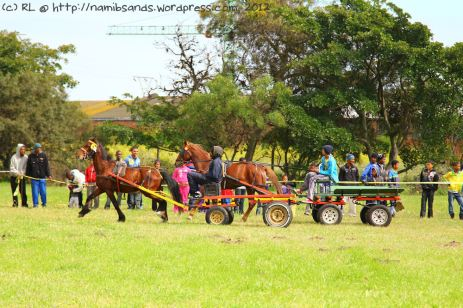 The entrants in the various classes put the horses through their paces