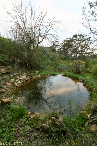 The meditation pond, tucked away higher up the hillside